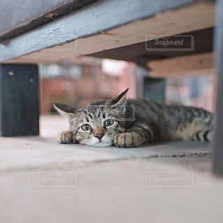 猫の写真・画像素材[9378]