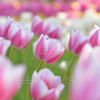 花の写真・画像素材[9377]