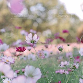 花の写真・画像素材[9374]