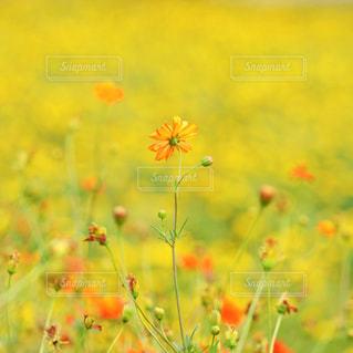 花の写真・画像素材[9373]