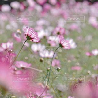 花の写真・画像素材[9370]