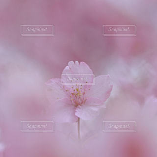 花の写真・画像素材[9363]