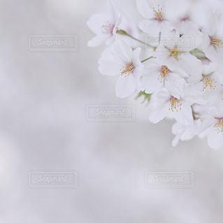 花の写真・画像素材[9362]