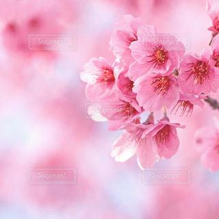 花の写真・画像素材[9361]