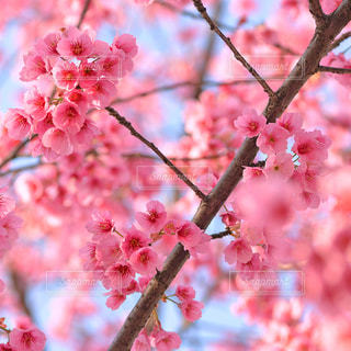 春の写真・画像素材[9360]