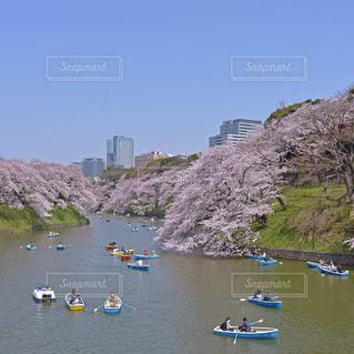 桜の写真・画像素材[9359]