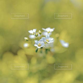 花の写真・画像素材[9354]