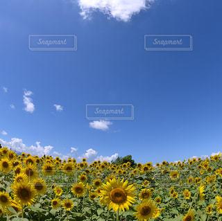 空の写真・画像素材[9337]