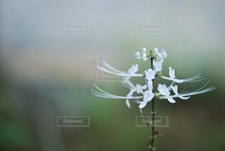 花の写真・画像素材[9332]
