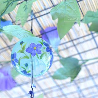 花の写真・画像素材[9324]