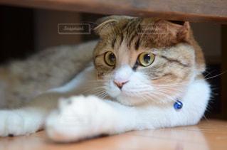 ネコの写真・画像素材[9318]