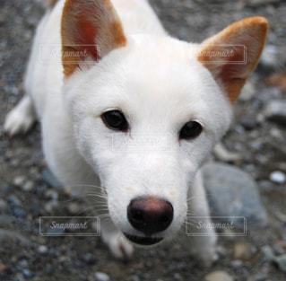 犬の写真・画像素材[9313]