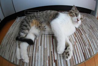 くつろぐ猫の写真・画像素材[9309]