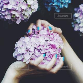 紫陽花の写真・画像素材[1714050]