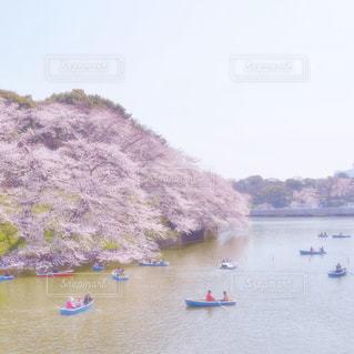 千鳥ヶ淵の桜の写真・画像素材[1714099]