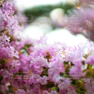 花の写真・画像素材[2490163]