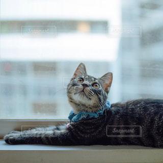 猫の写真・画像素材[2490190]