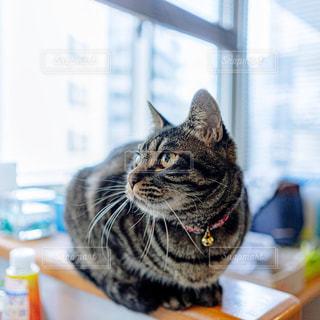 猫の写真・画像素材[2975456]