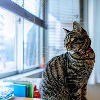 猫の写真・画像素材[2975457]