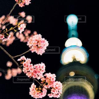 桜とスカイツリーの写真・画像素材[2975459]
