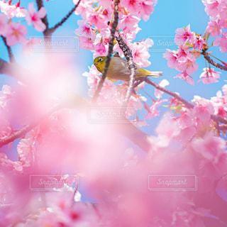 ピンクの花のグループふの写真・画像素材[3086255]