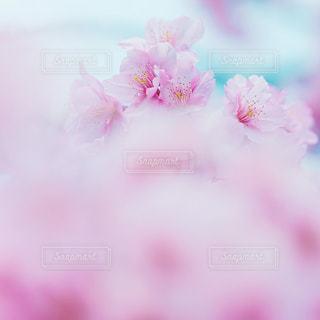 花のクローズアップの写真・画像素材[3086256]