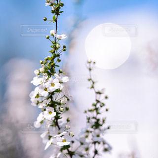 花のクローズアップの写真・画像素材[3086264]