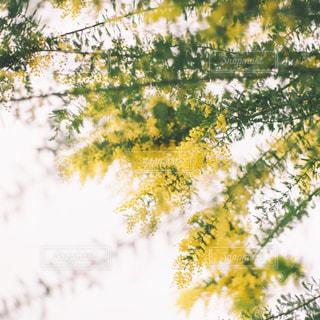 花のクローズアップの写真・画像素材[3086275]