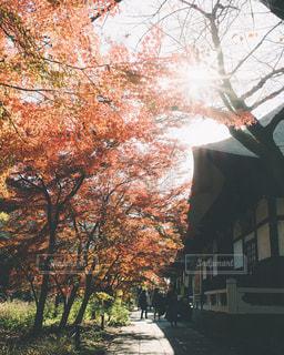 お寺の紅葉の写真・画像素材[3086281]