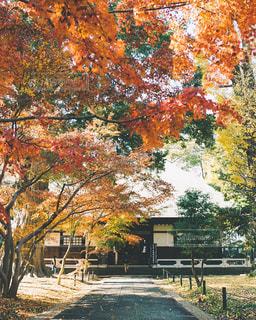 お寺の紅葉の写真・画像素材[3086284]