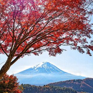 富士山と紅葉の写真・画像素材[3086287]