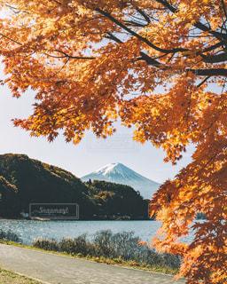 富士山と紅葉の写真・画像素材[3086289]