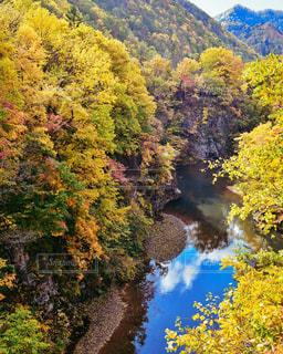 背景に山のある木の写真・画像素材[3086310]