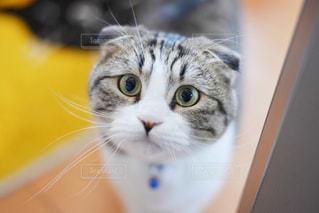 カメラを見ている猫の写真・画像素材[3233427]
