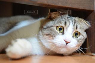 木のテーブルの下で横たわる猫の写真・画像素材[3233428]