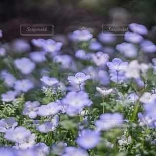 花のクローズアップの写真・画像素材[3605375]