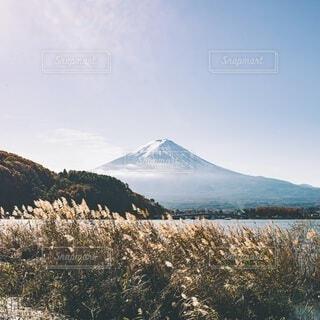 ススキと富士山の写真・画像素材[3980468]