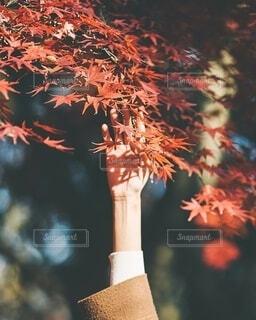 秋との戯れの写真・画像素材[3980469]