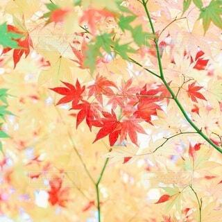 秋の始まりの写真・画像素材[3980480]