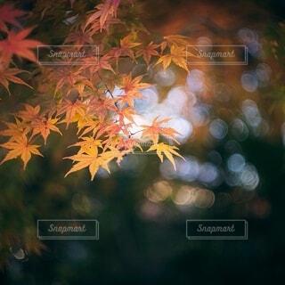 秋の気配の写真・画像素材[3980471]