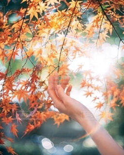 光の輪の写真・画像素材[3980479]