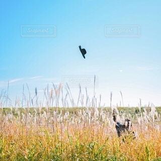 ススキ高原で帽子を投げる人の写真・画像素材[3980490]