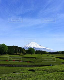 茶畑の写真・画像素材[4407142]