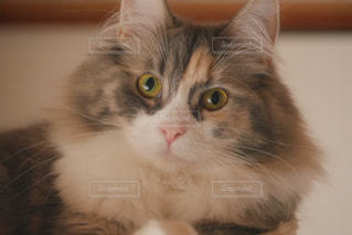猫の写真・画像素材[291380]