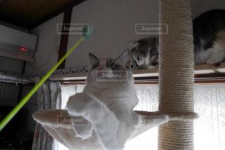 猫の写真・画像素材[292124]
