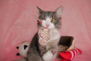 猫の写真・画像素材[295983]