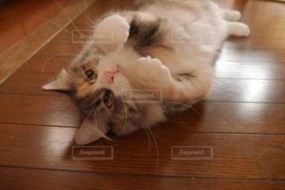 猫の写真・画像素材[296988]