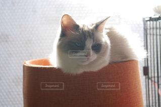 猫の写真・画像素材[323707]