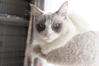 猫の写真・画像素材[325975]