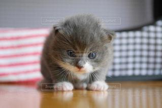 猫の写真・画像素材[547009]